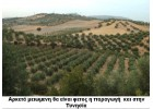 Χαμηλότερη από τις προβλέψεις  η  παραγωγή των Μεσογειακών χώρων