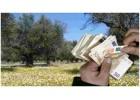 ΚΑΠ. Το άδοξο τέλος των επιδοτήσεων της ελιάς!