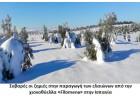 Τεράστιες οι ζημιές από την  χιονοθύελλα Filomena στους ελαιώνες της Ισπανίας