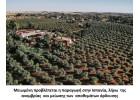 Μειωμένη η ερχόμενη παραγωγή στην Ισπανία και Ελλάδα
