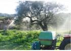 Δάκος, ξηρασία και τιμες ανησυχούν  τους  ελαιοπαραγωγούς