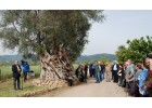 Προώθηση Ελαιοτουρισμού στην Κρήτη