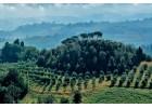 Annus terribilis το 2018 για την Ιταλία!