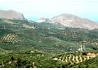 Ραγδαία  η πτώση  τής Ελαιοπαραγωγής  τα τελευταία χρόνια στην Κρήτη.