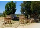 Eπισκέψεις στην  «Υψωμένη Ελιά»  και το «Μουσείο Ελιάς» Βατολάκκου