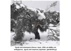 Θύματα της «Μήδειας» και οι Ελιές της Κρήτης
