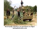Η Τουρκία κατηγορείται για εξαγωγές  κλεμμένου Συριακού ελαιολάδου