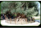 «Πράσινη Πολιτιστική Διαδρομή» στο Λασίθι