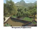 Ολοκληρώθηκαν οι μελέτες των Μνημειακών ελαιοδέντρων