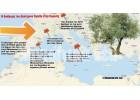 """Απειλή για τις καλλιέργειες της Κρήτης από το βακτήριο """"Xylella"""""""